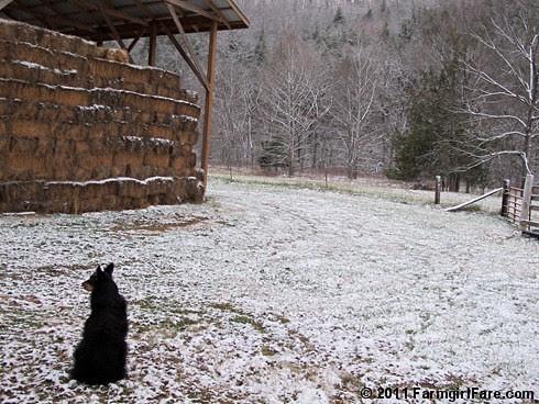 Snow day on the farm 2 - FarmgirlFare.com