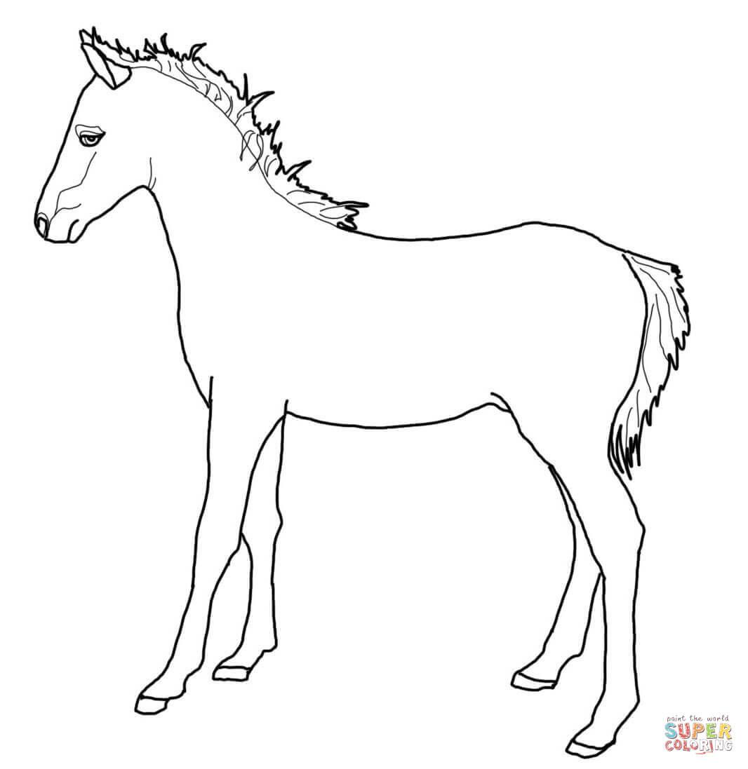 Rennend Paard Kleurplaat Bovenste Deel Kleurplaten Paarden En Pony Krijg