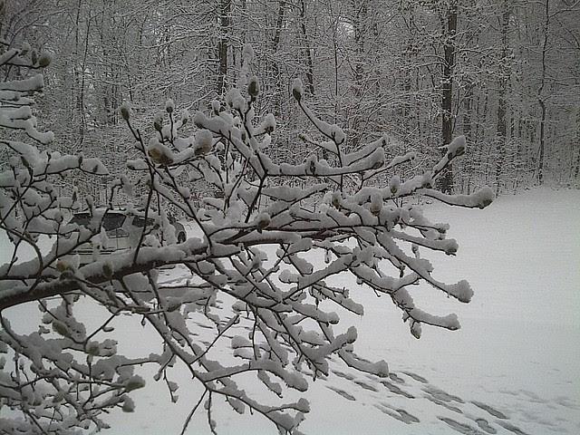 Sudden Virginia snow