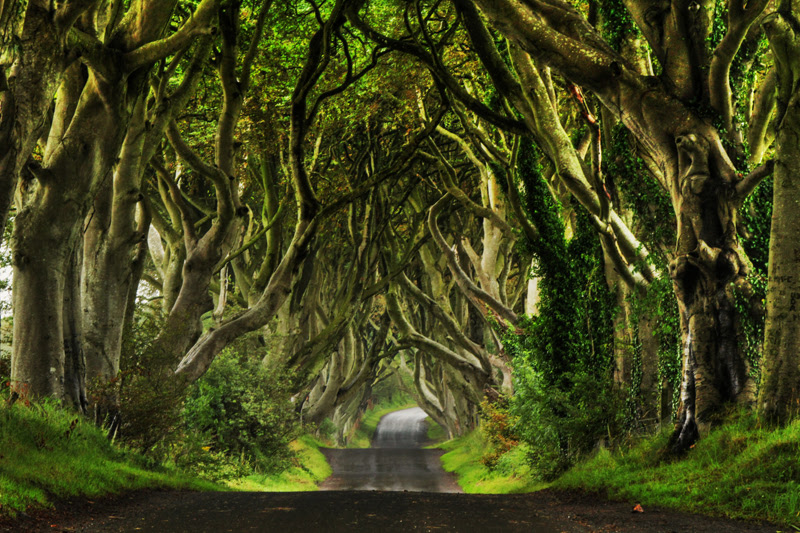 Image result for The Dark Hedges, Ireland
