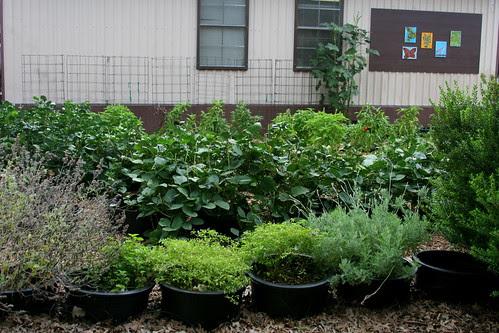 school garden planting rows