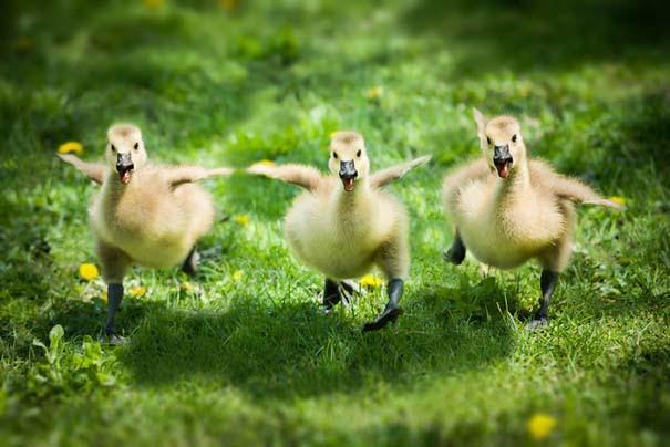 Εικόνες με ζώα: Υπέροχες φωτογραφίες με φιλίες ζώων που θα σας φτιάξουν τη διάθεση