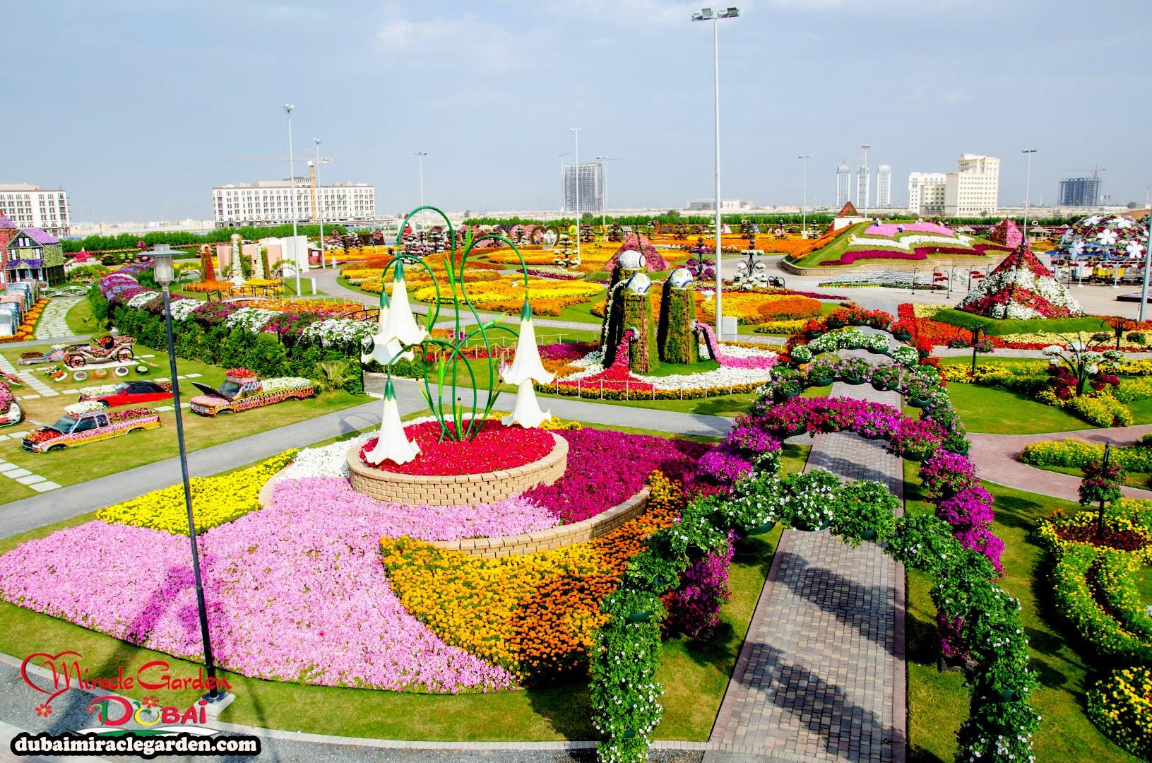 Dubai Miracle Garden 23
