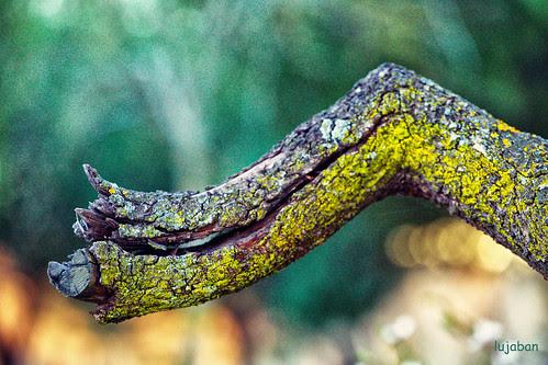 broken branch... by lujaban