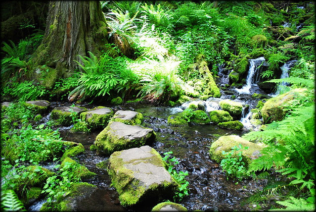 stepping stones over a creek on the Clackamas River Trail