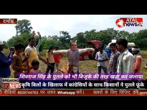 केंद्र सरकार के कृषि बिलों के विरोध में.. किसानों ने खेतों में बिजूका की तरह खड़े किए नेताओं के  पुतले..  मुख्यमंत्री शिवराज सिंह के पुतले भी खड़े नजर आए.. कांग्रेसियों के साथ किसानों ने पुतला दहल करके विरोध प्रदर्शन किया..