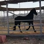 רוץ בן סוסי: נחנך חדר הכושר הראשון לסוסי משטרת ישראל - וואלה!