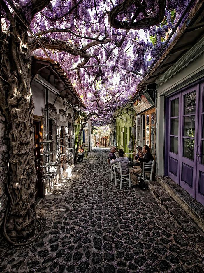 calles-arboles-flores (7)