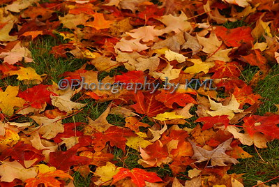 colorful maple leaves on the ground in the autumn
