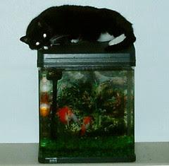 deuce conquers the aquarium, again