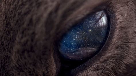 Universe is in the eye of the animal wallpapers and images