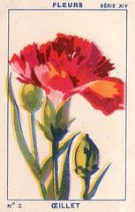 milliat fleurs002