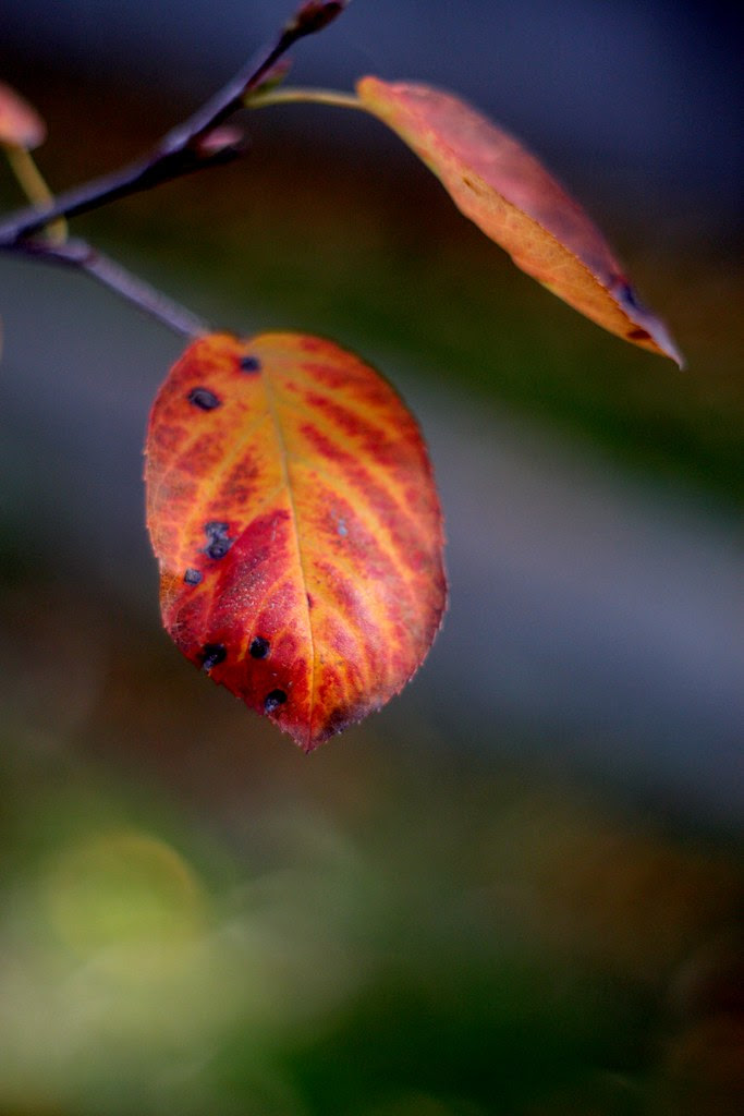 some november leaves