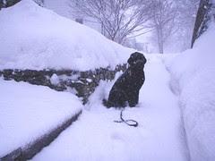 skippy snow