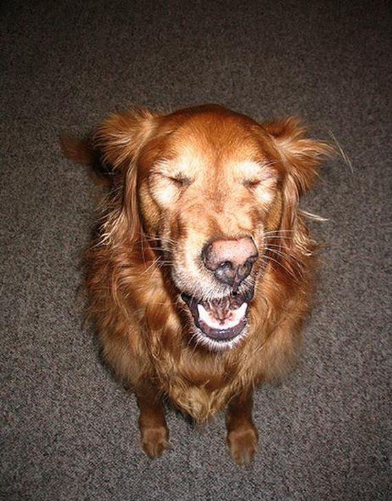 Σκύλοι-Caught-Mid-Φτάρνισμα