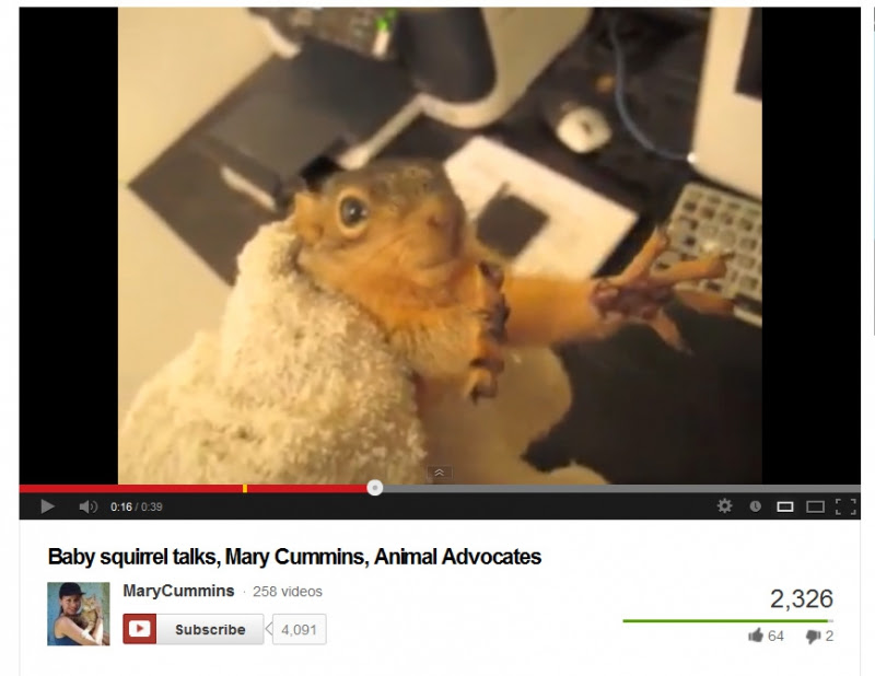 800_mary_cummins_scares_a_baby_squirrel.jpg original image ( 868x671)