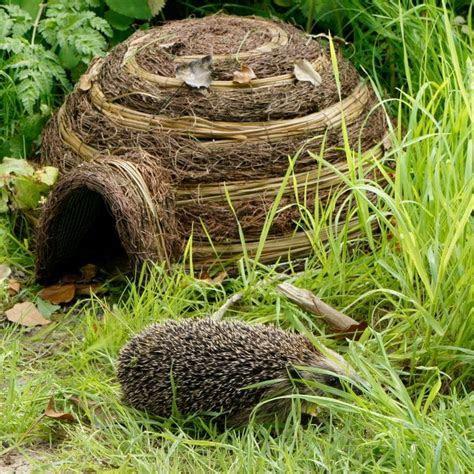 Igloo Hedgehog Home   Find Me A Gift