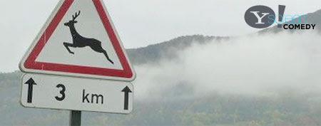 'Drunk' deer forces driver off road (Broken News Daily)