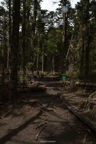 매리설산 속 원시삼림에 들어오면 시간이 멈춰있다는 듯한 느낌이 든다.