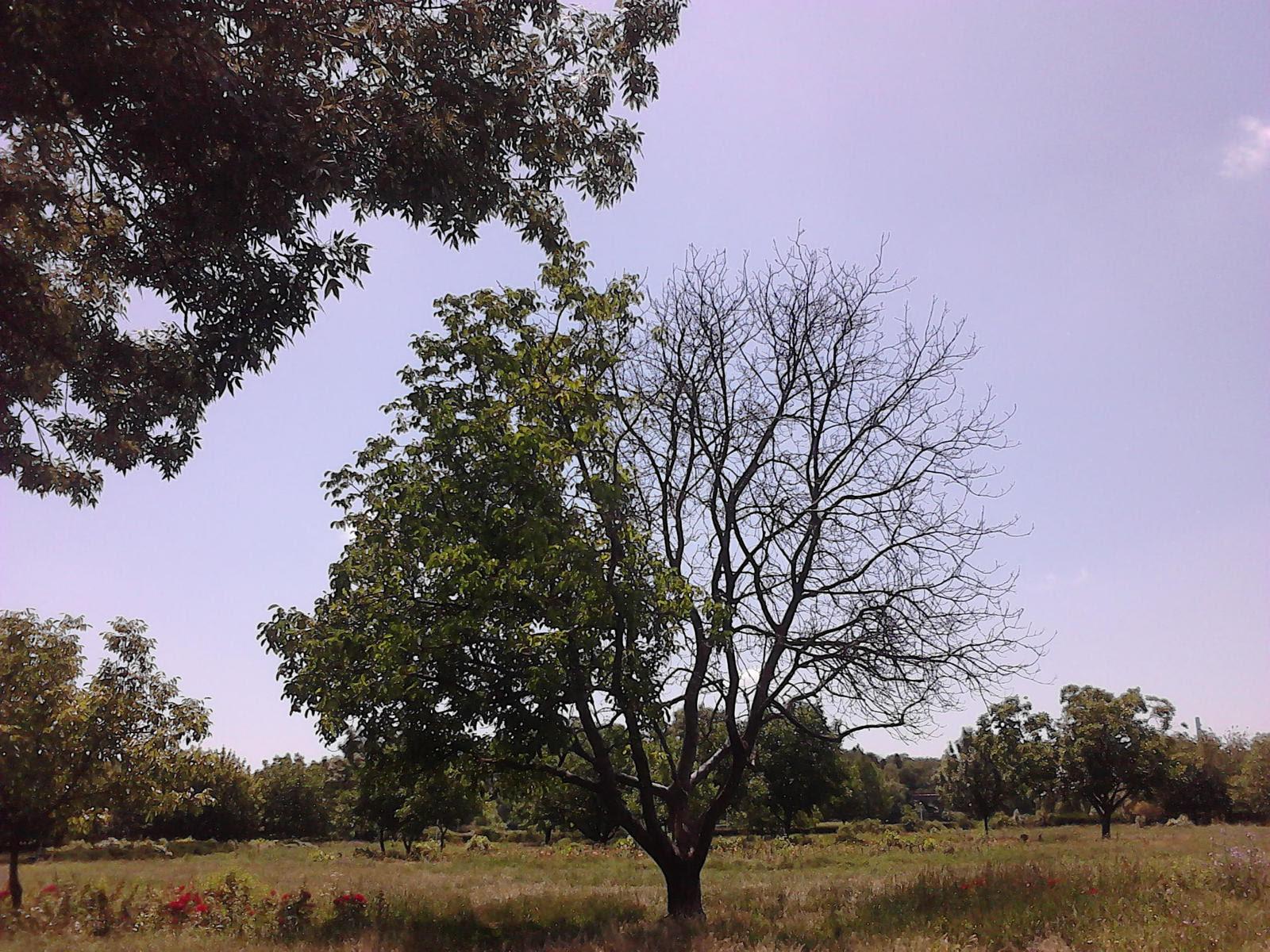 Gamemakertechinfo Images Half Dead Half Alive Tree