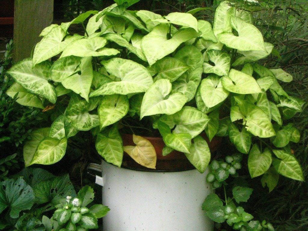 outdoor-houseplant.jpg