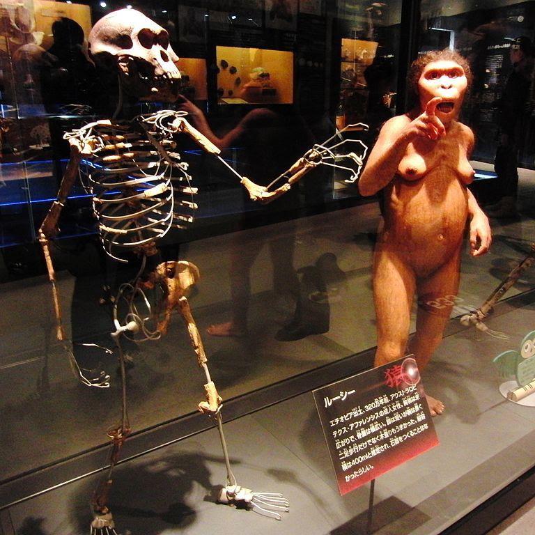 Lucy - esqueleto e reconstituição