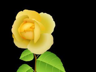 Yellow Rose Free Vectors Ui Download