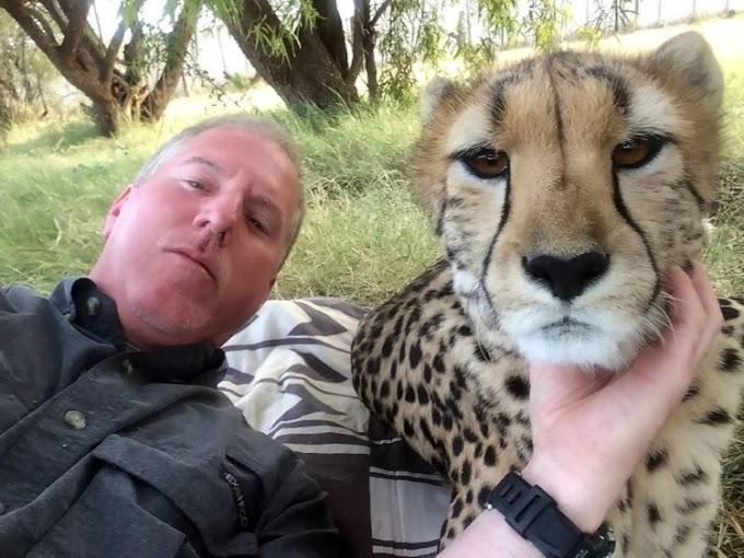 Toma una siesta bajo un árbol y una guepardo decide acompañarlo tiernamente