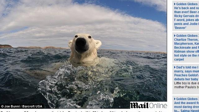 http://extra.globo.com/incoming/3681877-8bf-c35/w640h360-PROP/urso-polar-1.jpg