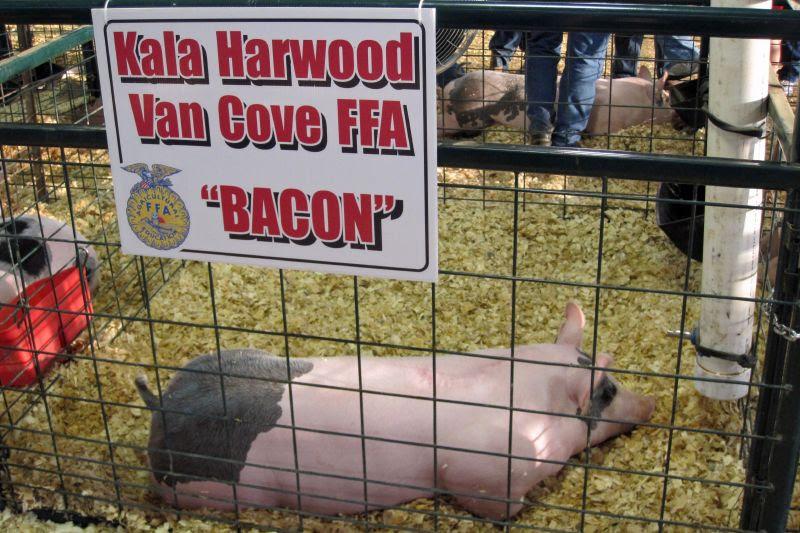 Polk County Fair 14
