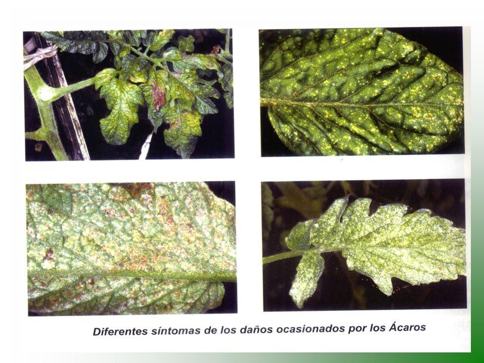 Resultado de imagen para Plagas de las hortalizas