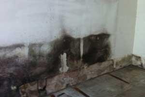 Schimmel Im Keller Entfernen Ursache Folgen Und Beseitigung