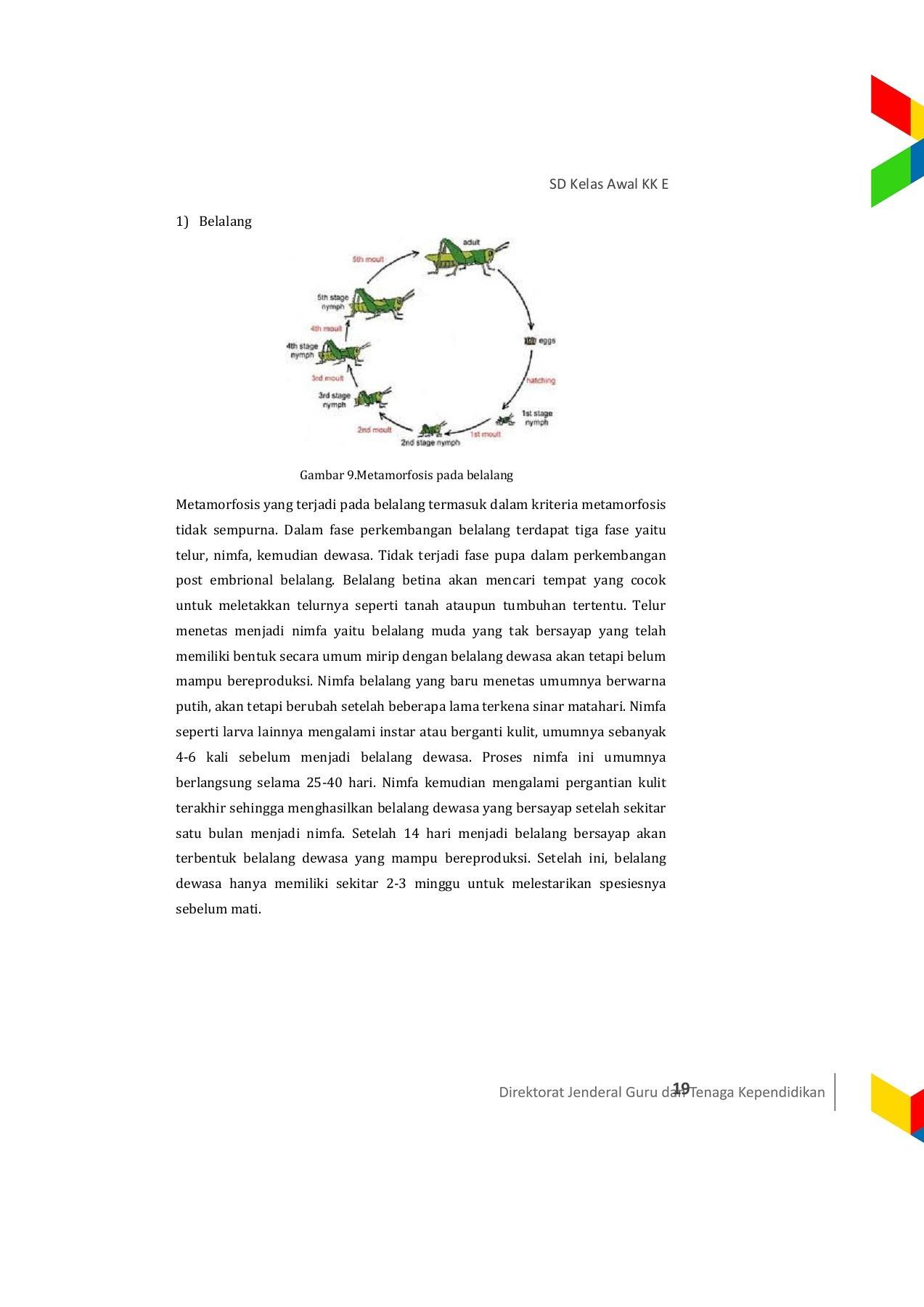 87 Koleksi Tabel 2.10 Tahapan Metamorfosis Gambar Hewan Dan Tahap Pertumbuhannya Keterangan HD Terbaru