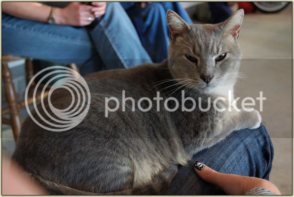 Lap-Cat Fred