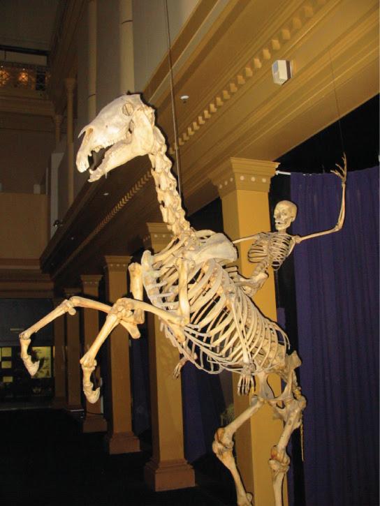 102+ Gambar Hewan Endoskeleton Gratis Terbaru