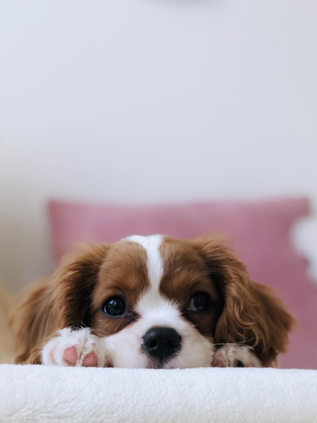 Puppy Wallpapers Free Hd Download 500 Hq Unsplash