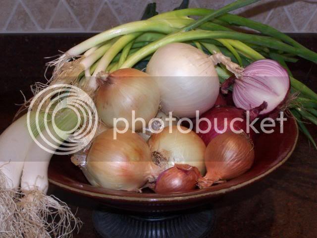 http://img.photobucket.com/albums/v33/namaste2uom/100_8731.jpg