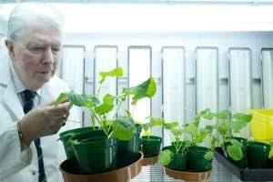 Revolução agrícola: bactérias fazem plantas sintetizaram nitrogênio do ar