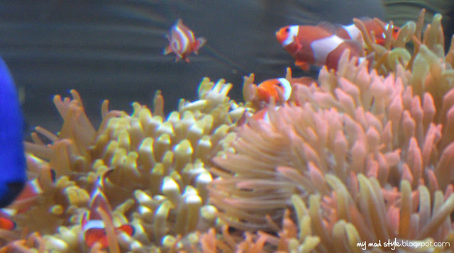 Denver Aquarium 7