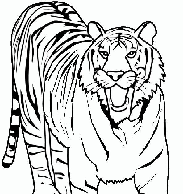 malvorlagen gratis tiger