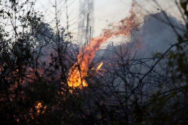 موجة حرائق تضرب الأراضي الفلسطينية المحتلة (المستوطنات)