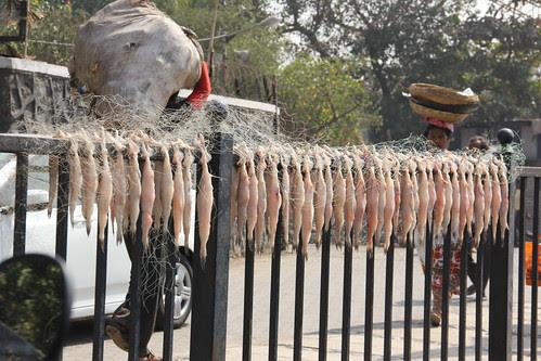Dried Bombils - Bombay Ducks by firoze shakir photographerno1