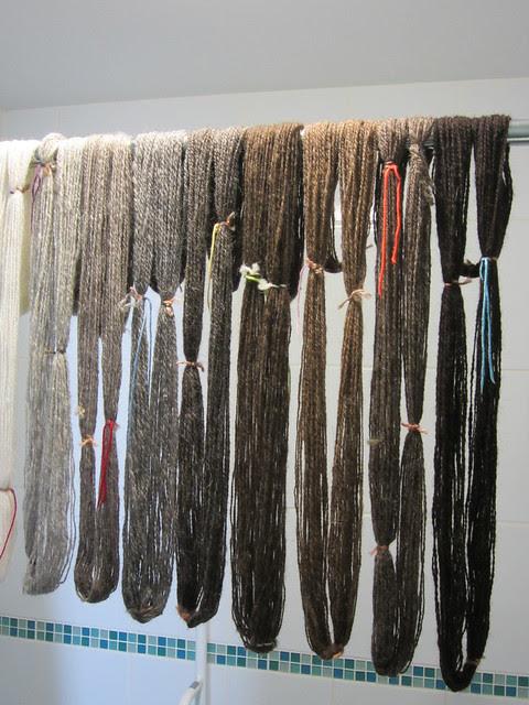 Sheep Heid skeins drying (2)