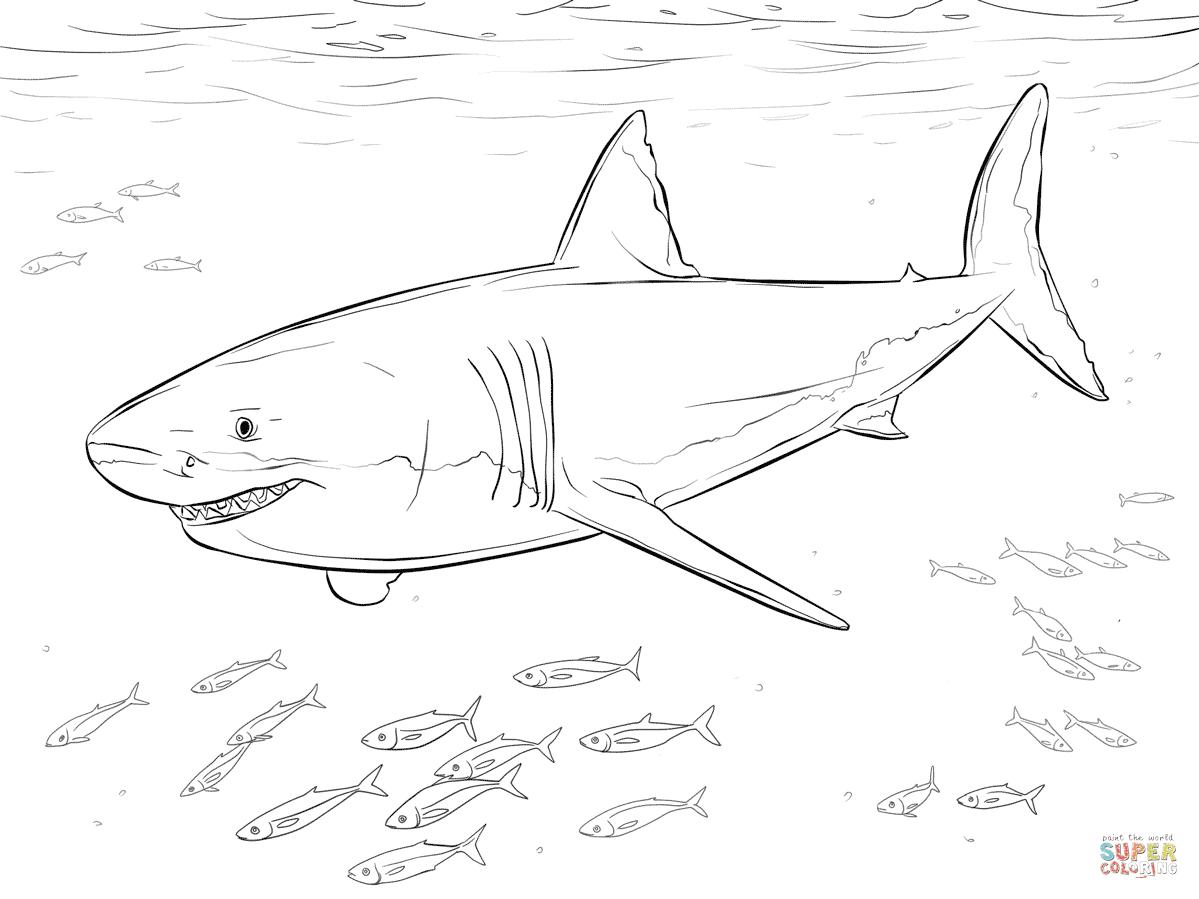 Klick das Bild Weißer Hai mit Pilotfischen