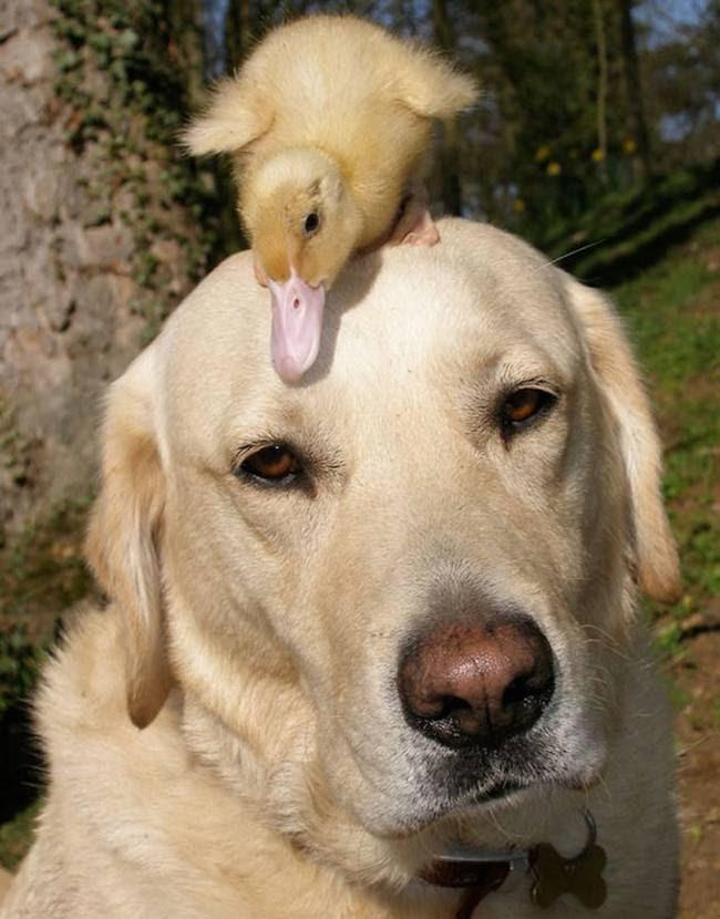 amizades-incomuns-com-animais-4