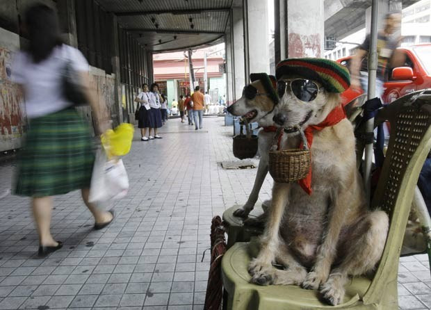 Em 2010, os cães chamados 'Habagat' e 'Bagwis' foram flagrados Manila, nas Filipinas, pedindo esmola. Estilosos,.os animais usavam chapéu e óculos escuros enquanto seguravam uma cestinha com a boca.  (Foto: Pat Roque/AP)