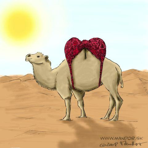 http://www.toonpool.com/user/1087/files/camel_140705.jpg