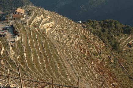 terrazze di Liguria