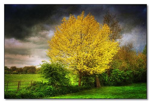Spring Tree, Wistow