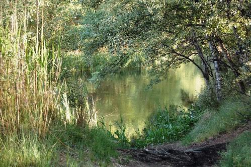 DSC_0565 Arco vegetal sobre el río